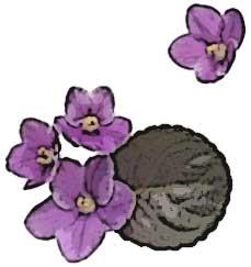 bm_african_violets.jpg
